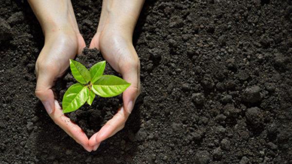 dicas para ajudar conservar o meio ambiente
