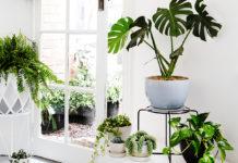 Plantas dentro de casa – Escolha, organização e o que não fazer